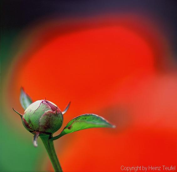 Roter Farbtupfer