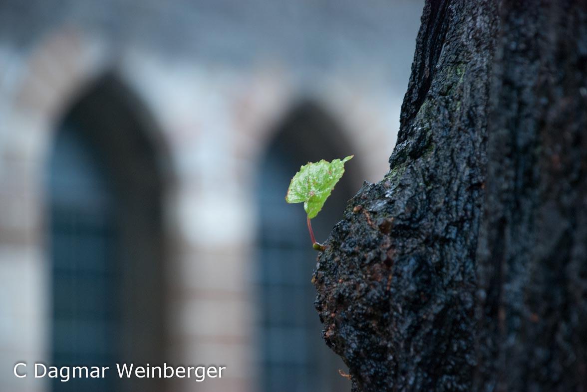 Dagmar Weinberger1